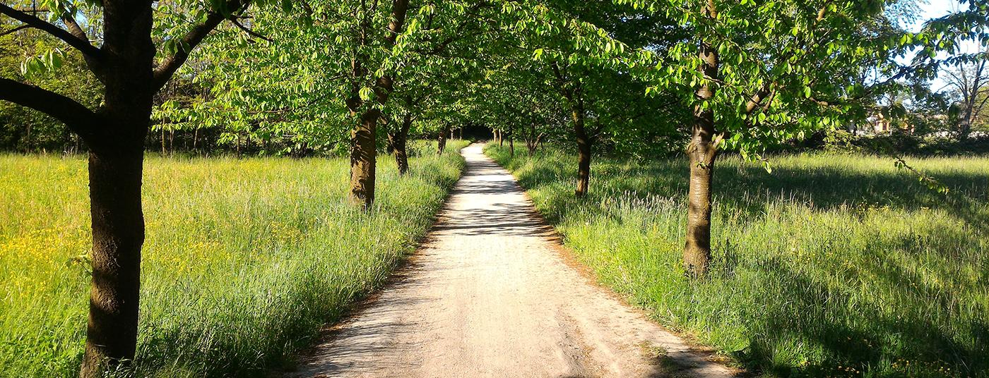 Parco delle Groane con <strong>35 Km di piste ciclabili </strong>